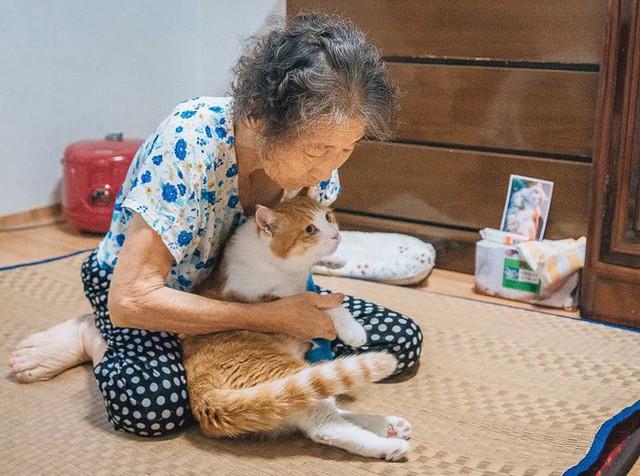 Bộ ảnh đầy cảm xúc của cụ bà Hàn Quốc: Tuổi già chẳng cần gì, chỉ cần một chú mèo béo bầu bạn thôi - Ảnh 10.