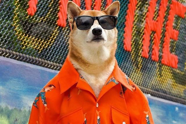 """Chó thời trang Bodhi cực """"ngầu"""" với mức lương 15.000 USD/tháng - Ảnh 11."""