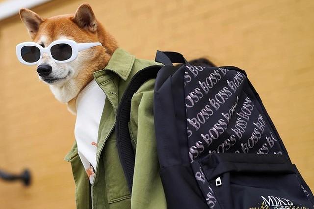 """Chó thời trang Bodhi cực """"ngầu"""" với mức lương 15.000 USD/tháng - Ảnh 12."""