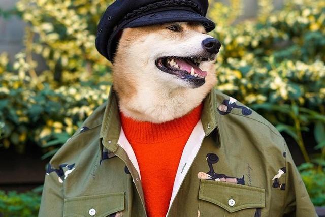 """Chó thời trang Bodhi cực """"ngầu"""" với mức lương 15.000 USD/tháng - Ảnh 10."""