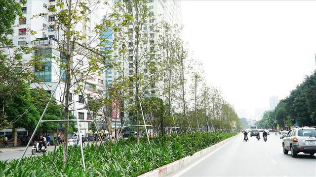 Bất chấp kiểu thời tiết khó chiều ở Hà Nội, hàng phong lá đỏ đổi màu đẹp lãng mạn - Ảnh 1.
