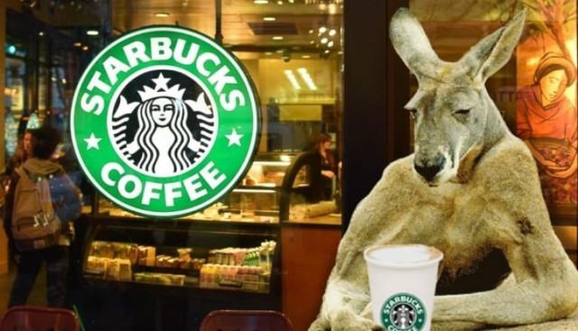 Câu chuyện của Starbucks ở Úc: Bành trướng quá nhanh để rồi bật bãi không kèn không trống - Ảnh 2.