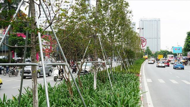 Bất chấp kiểu thời tiết khó chiều ở Hà Nội, hàng phong lá đỏ đổi màu đẹp lãng mạn - Ảnh 7.