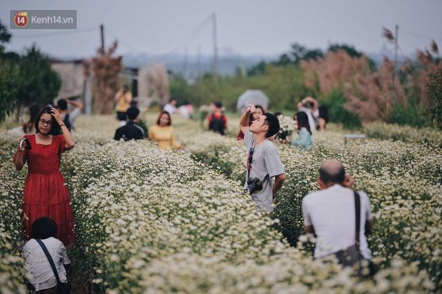 Vườn cúc hoạ mi ở Hà Nội thất thủ cuối tuần: 1 mét vuông có chục nhiếp ảnh gia và mẫu - Ảnh 14.