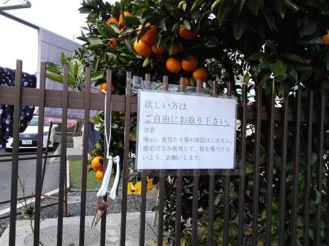 4 khoảnh khắc rất đỗi đời thường nhưng đủ để thấy người Nhật hiếu khách nhất quả đất luôn - Ảnh 1.