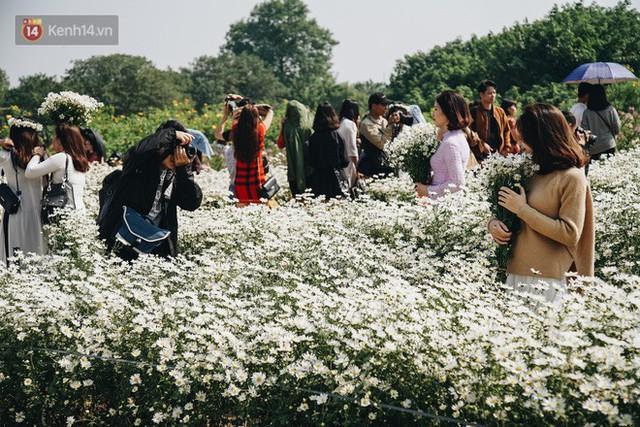 Vườn cúc họa mi ở Hà Nội tiếp tục thất thủ: Đường vào tắc nghẽn, chụp một bức ảnh phải né bao nhiêu người - Ảnh 14.