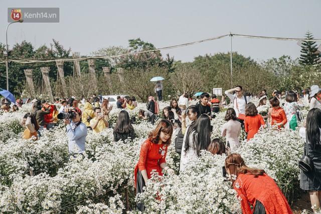Vườn cúc họa mi ở Hà Nội tiếp tục thất thủ: Đường vào tắc nghẽn, chụp một bức ảnh phải né bao nhiêu người - Ảnh 9.