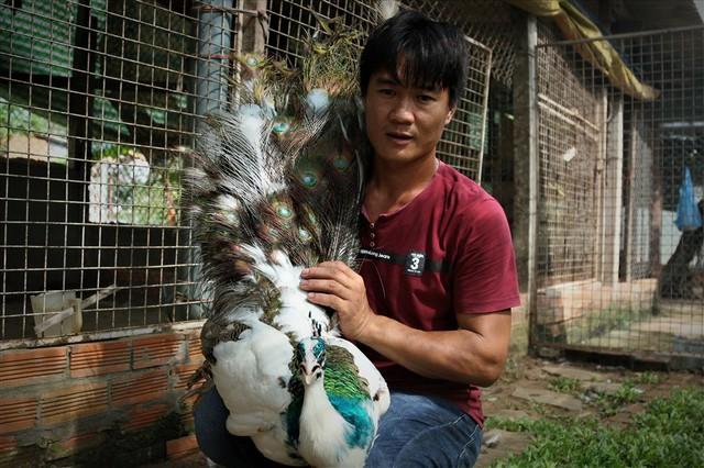 Cần Thơ: Tận mắt chiêm ngưỡng trang trại chim quý, có cặp giá cao vút 100 triệu đồng vẫn khiến khách xếp hàng chờ mua - Ảnh 6.