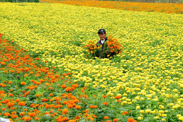Chùm ảnh: Đắm đuối giữa vựa hoa nổi tiếng nhất vùng đất Chín Rồng - Ảnh 2.