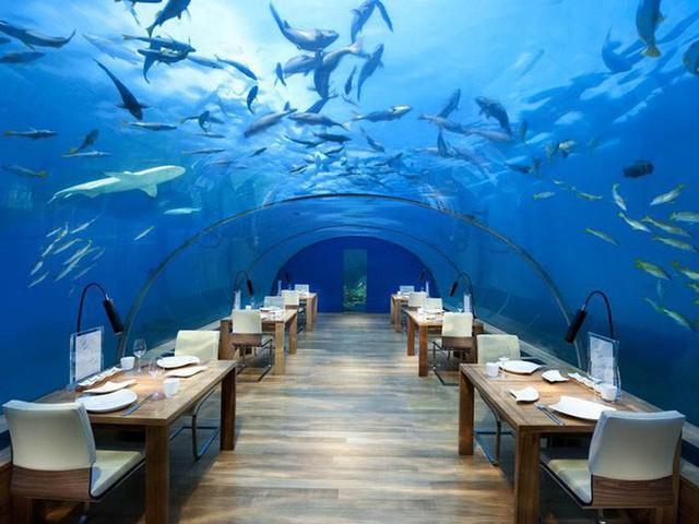 Bên trong khách sạn dưới biển đầu tiên trên thế giới, nơi bạn có thể ngủ cạnh cá mập với chi phí 1 tỷ/1 đêm - Ảnh 9.