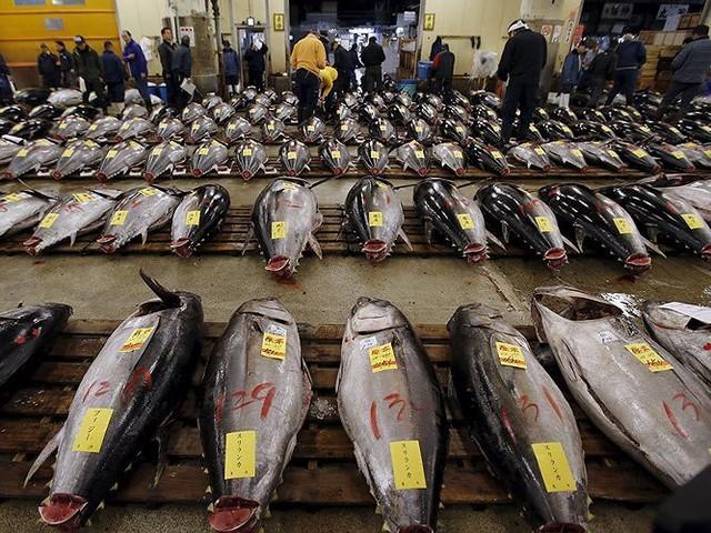 Chợ cá lớn nhất thế giới có gì đặc biệt? - Ảnh 2.