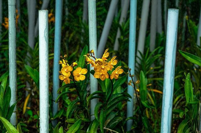 Ngắm vườn lan mokara lãi 2 tỉ đồng/năm của nam thanh niên Đà Nẵng - Ảnh 15.