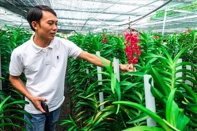 Ngắm vườn lan mokara lãi 2 tỉ đồng/năm của nam thanh niên Đà Nẵng - Ảnh 9.