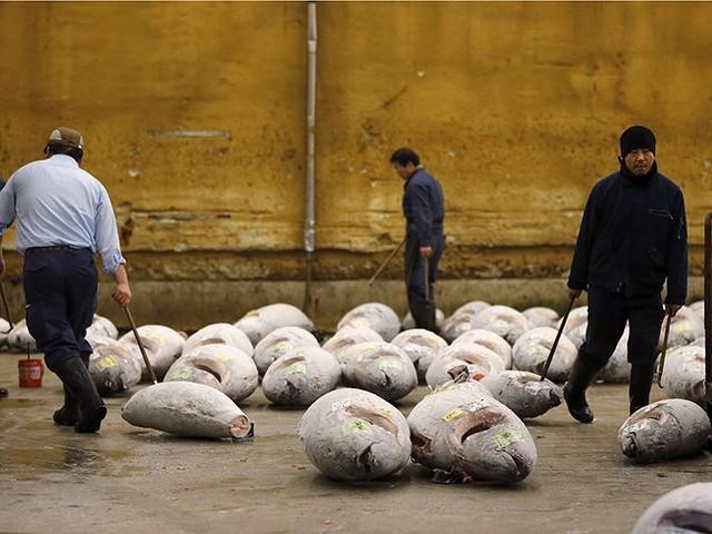 Chợ cá lớn nhất thế giới có gì đặc biệt? - Ảnh 10.