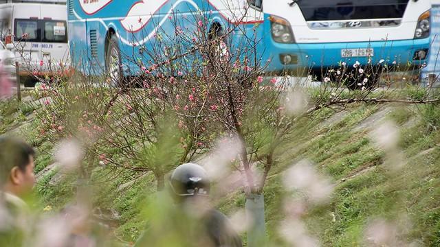 Hoa đào bung nở trong giá rét, khoe sắc trên phố Hà Nội   - Ảnh 14.