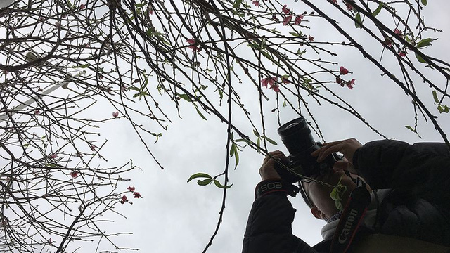 Hoa đào bung nở trong giá rét, khoe sắc trên phố Hà Nội   - Ảnh 15.