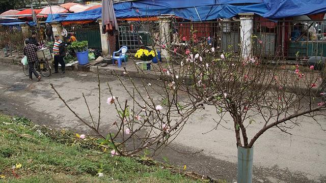 Hoa đào bung nở trong giá rét, khoe sắc trên phố Hà Nội   - Ảnh 6.