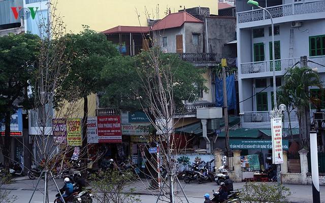 Hàng cây phong ở Hà Nội trơ cành, khô héo ngay đầu mùa đông - Ảnh 15.