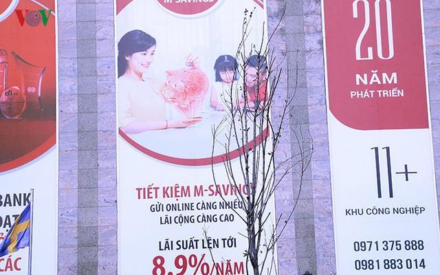 Hàng cây phong ở Hà Nội trơ cành, khô héo ngay đầu mùa đông - Ảnh 19.