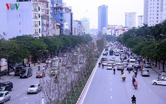 Hàng cây phong ở Hà Nội trơ cành, khô héo ngay đầu mùa đông - Ảnh 7.