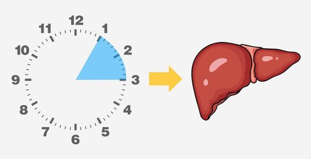 Thường tỉnh giấc vào khung giờ này trong đêm, bạn biết ngay gan, phổi, mật... đang hỏng - Ảnh 4.