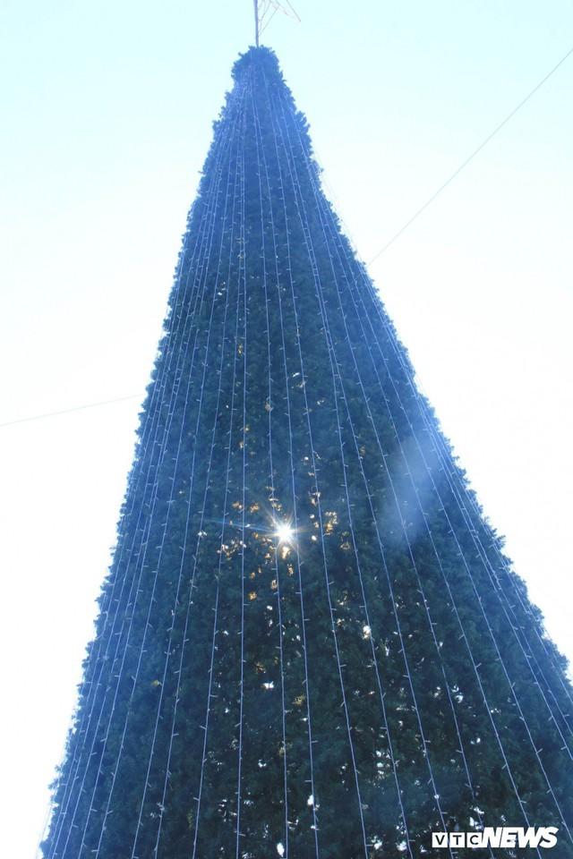 Ảnh: Cây thông Noel khổng lồ cao 12m mừng lễ Giáng sinh ở Hà Nội - Ảnh 3.