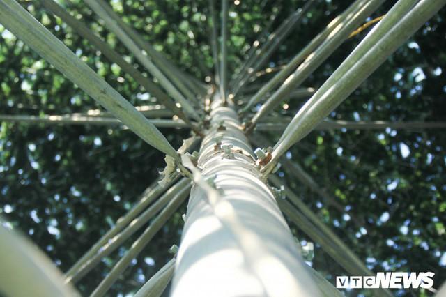 Ảnh: Cây thông Noel khổng lồ cao 12m mừng lễ Giáng sinh ở Hà Nội - Ảnh 6.