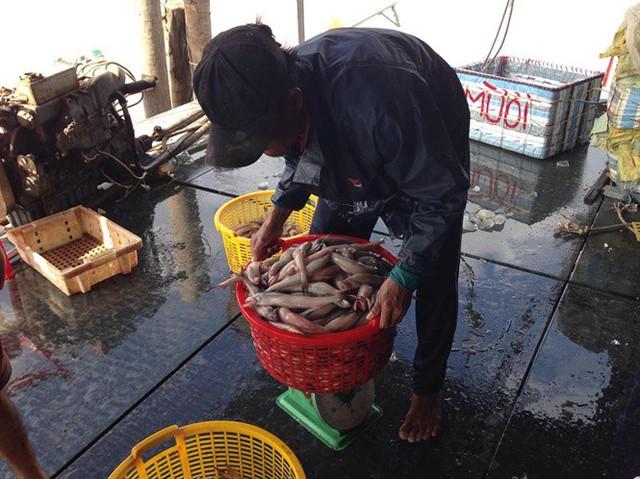 Giá cá khoai liên tục tăng mạnh, ngư dân phấn khởi - Ảnh 1.