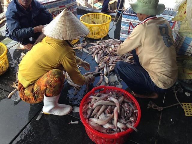 Giá cá khoai liên tục tăng mạnh, ngư dân phấn khởi - Ảnh 2.