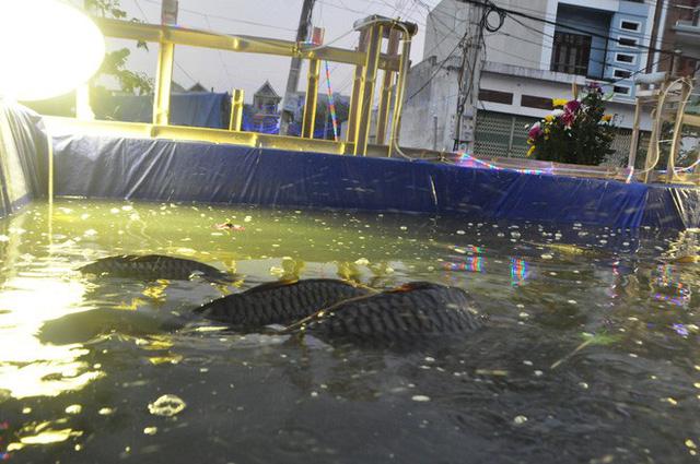 Lạ mắt hang đá đêm Noel được trang trí bể cá, với cá sấu hỏa tiễn 12kg ở Nam Định - Ảnh 22.