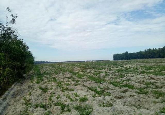 Thanh tra vào cuộc vụ Công ty Địa ốc City Land bán đất nền trái luật - Ảnh 1.