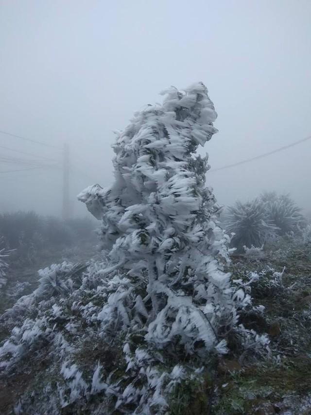 Băng tuyết phủ trắng nhà cửa, xe cộ ở đỉnh Mẫu Sơn - Ảnh 3.