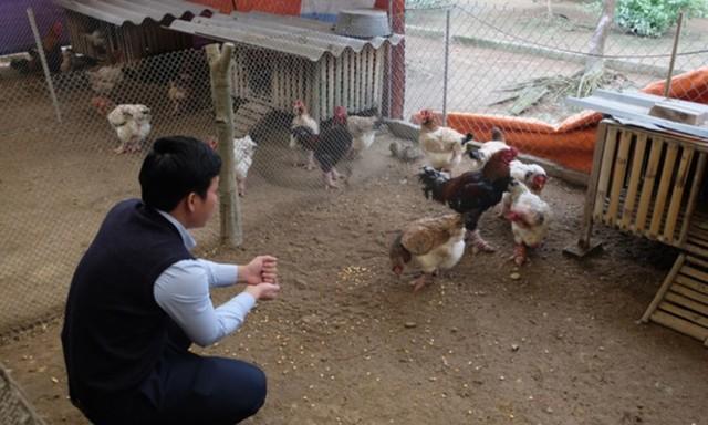 Thực hư chuyện gà Đông Tảo giá vài chục triệu đồng/con làm quà Tết - Ảnh 10.
