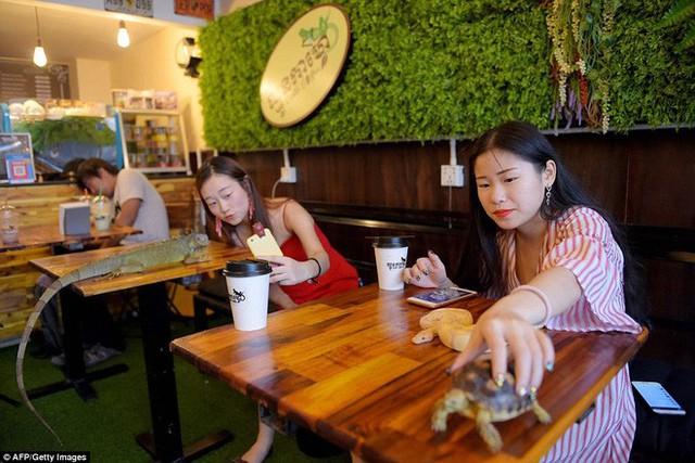 Quán cà phê ở Campuchia gây cảm giác mạnh cho thực khách khi thả cả... rắn, bọ cạp lẫn cự đà xung quanh quán - Ảnh 1.