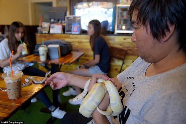 Quán cà phê ở Campuchia gây cảm giác mạnh cho thực khách khi thả cả... rắn, bọ cạp lẫn cự đà xung quanh quán - Ảnh 3.