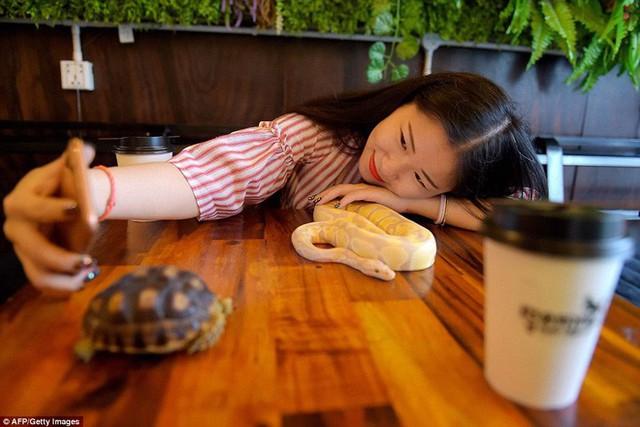 Quán cà phê ở Campuchia gây cảm giác mạnh cho thực khách khi thả cả... rắn, bọ cạp lẫn cự đà xung quanh quán - Ảnh 4.