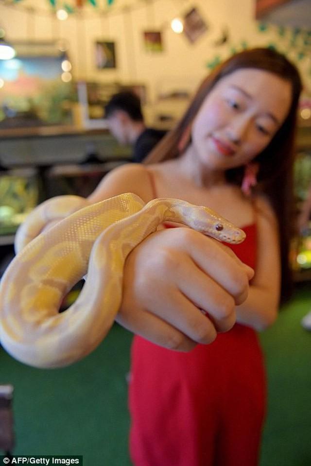 Quán cà phê ở Campuchia gây cảm giác mạnh cho thực khách khi thả cả... rắn, bọ cạp lẫn cự đà xung quanh quán - Ảnh 7.