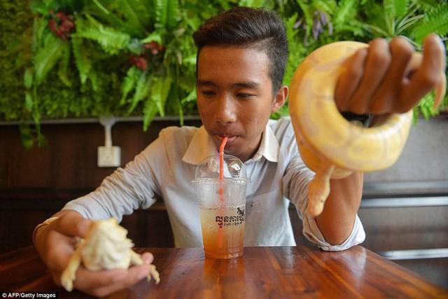 Quán cà phê ở Campuchia gây cảm giác mạnh cho thực khách khi thả cả... rắn, bọ cạp lẫn cự đà xung quanh quán - Ảnh 8.