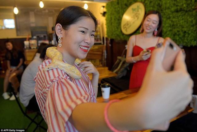 Quán cà phê ở Campuchia gây cảm giác mạnh cho thực khách khi thả cả... rắn, bọ cạp lẫn cự đà xung quanh quán - Ảnh 9.