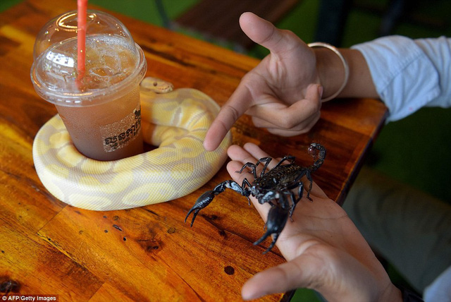 Quán cà phê ở Campuchia gây cảm giác mạnh cho thực khách khi thả cả... rắn, bọ cạp lẫn cự đà xung quanh quán - Ảnh 10.