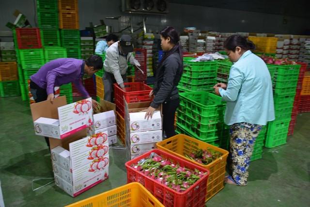Hái rau, trái cây bán kiếm tỉ USD mỗi năm - Ảnh 1.