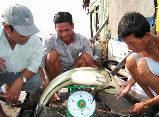Nghề nuôi cá bạc tỷ ở Sơn Hải - Ảnh 12.