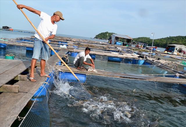 Nghề nuôi cá bạc tỷ ở Sơn Hải - Ảnh 10.