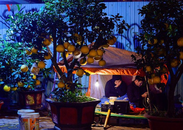 Ảnh: Tê cóng trong đêm Hà Nội lạnh dưới 10 độ C trông cây cảnh Tết - Ảnh 1.