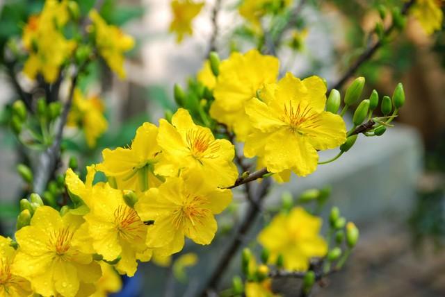 Những loại hoa mang tài, rước lộc vào nhà nhất định phải trưng ngày Tết - Ảnh 2.