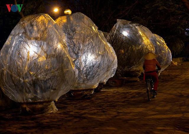 Ảnh: Tê cóng trong đêm Hà Nội lạnh dưới 10 độ C trông cây cảnh Tết - Ảnh 13.