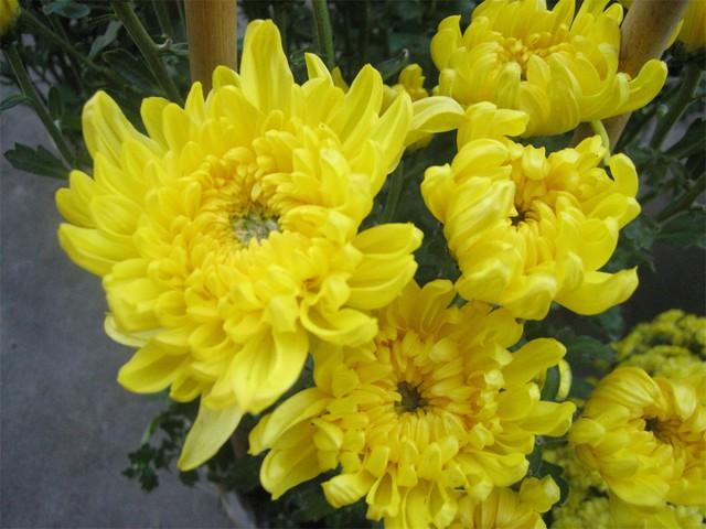 Những loại hoa mang tài, rước lộc vào nhà nhất định phải trưng ngày Tết - Ảnh 3.