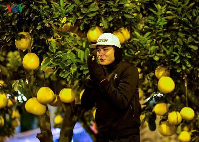 Ảnh: Tê cóng trong đêm Hà Nội lạnh dưới 10 độ C trông cây cảnh Tết - Ảnh 6.