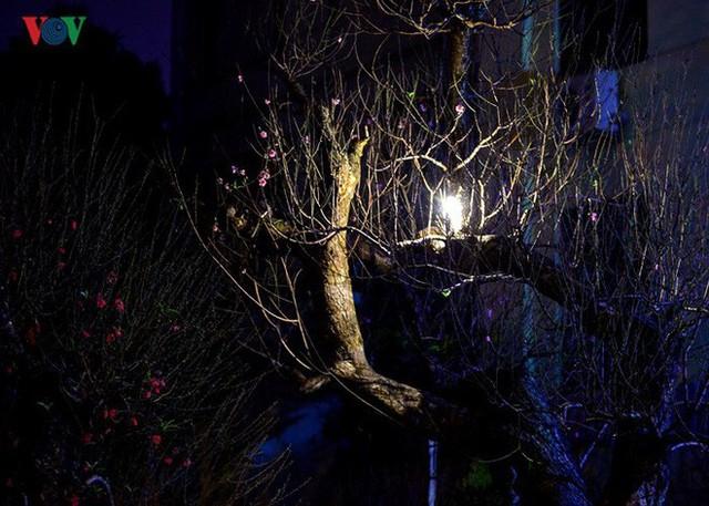 Ảnh: Tê cóng trong đêm Hà Nội lạnh dưới 10 độ C trông cây cảnh Tết - Ảnh 8.