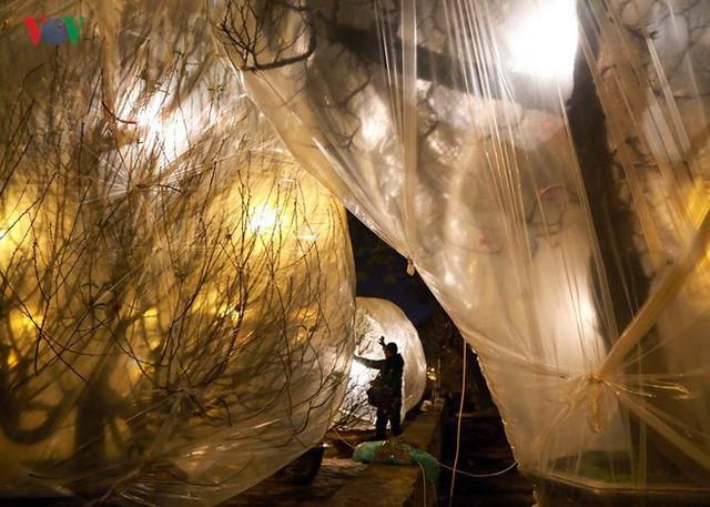 Ảnh: Tê cóng trong đêm Hà Nội lạnh dưới 10 độ C trông cây cảnh Tết - Ảnh 10.